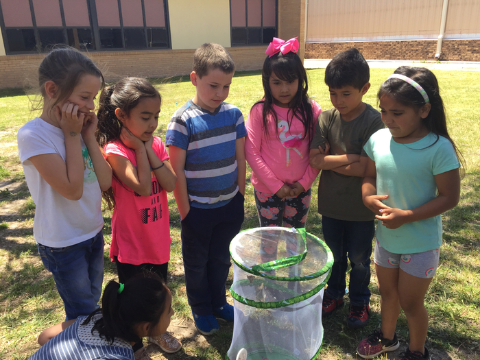 Releasing the butterflies!